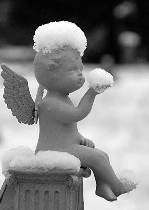 Voeu Provençal - Conte de Noel - Nouvel An